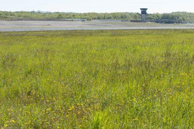 Prairie fleurie,Aeroport Brive la Gaillarde, © R.Seitre/Aéro Biodiversité