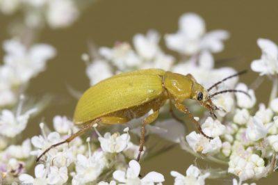 © R.Seitre/Aéro Biodiversité