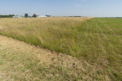Gestion différenciée de la prairie,Aéroport de Tours Val de Loire, © R.Seitre/Aéro Biodiversité